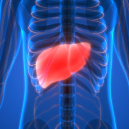 Is your liver getting fat?